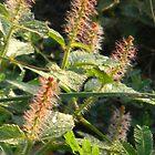 New Wildflowers by Navigator