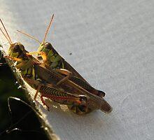 Grasshopper Hugs by Martha Medford