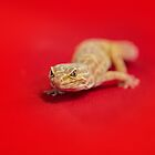 Lizard on a Red Background by Pixie Copley LRPS