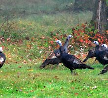 Wild Turkeys Feeding Along The Forest by Geno Rugh