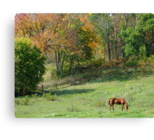 Fall Meadow Canvas Print