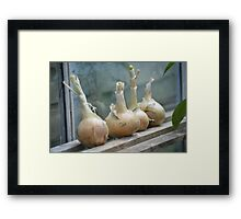 Onion Store Framed Print
