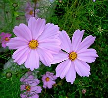 Cosmos Beauty by goddarb