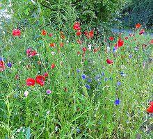 The Beauty Of Meadow Flowers by Fara