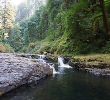 Silver Falls State Park by lisastevens