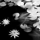 lily pond by Marianna Tankelevich