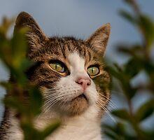 Bird Watching by AlexFHiemstra