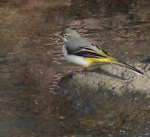 Grey Wagtail 'Oil Painting' by ChameleonImages