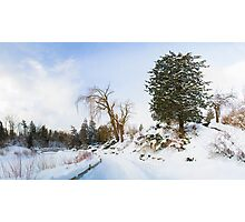 Winter at Edwards Gardens Photographic Print