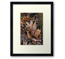 Frosty leaves  Framed Print
