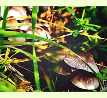 Mushrooms Hiding in Long Grass by Jessica Reilly