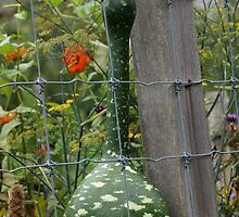 Funky Gourd by AGODIPhoto