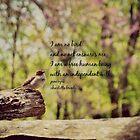 I Am No Bird by Kimberose