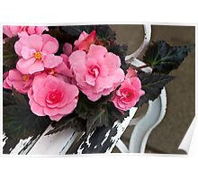 Last Of Summer  -  Begonias On Bench  Poster