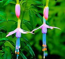 Dancing Flowers, Butchart Gardens, BC by Thomas Barber