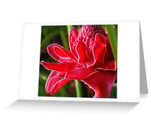 Glistening (Exotic Red Torch Ginger)  Greeting Card