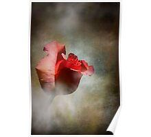 One Single Rose Poster