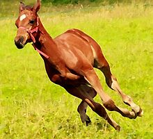 active foal by fastphoto