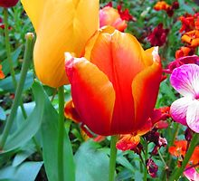SOLD - TWO TULIPS by Colleen2012
