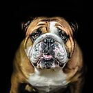 Bulldogs by ARIANA1985