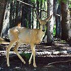 Deer in Dappled Light  by Jo-Anne Gazo-McKim