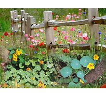 Nasturtium fields Photographic Print