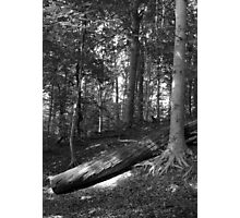 In the Woods B&W Photographic Print