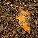 Autumn Leaf by elasita