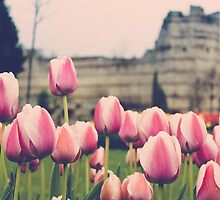 Ottoman Tulips in Istanbul by SuzannemorriS