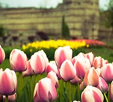 Ottoman Tulip Garden In Istanbul, Turkey by SuzannemorriS