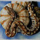 Blood Python by Rebecca Koller