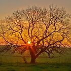 Tree at Sunset by Hans Kawitzki