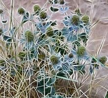Sea Holly by missmoneypenny
