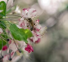 Busy Bee Too by yolanda