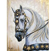 Sir Camelot Photographic Print