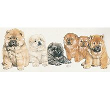 Chow Chow Puppies Photographic Print