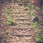 Autumn Steps by Errne