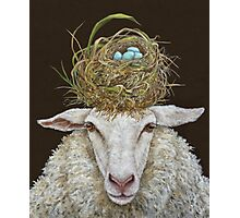 Judith the Sheep with nest Photographic Print