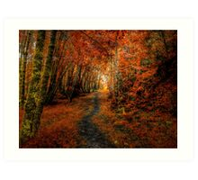 Trails In The Woods ~ Old Santiam Wagon Road ~ Art Print