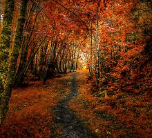 Trails In The Woods ~ Old Santiam Wagon Road ~ by Charles & Patricia   Harkins ~ Picture Oregon