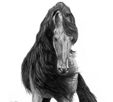 Black Flowing Manes by SD 2010 Photography & Equine Art Creations