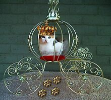 I CAN BE THE PURRFECT QUEEN OR THE QUEEN OF DENIAL>FELINE>CAT PICTURE by ✿✿ Bonita ✿✿ ђєℓℓσ