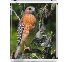 Red Shouldered Hawk iPad Case/Skin