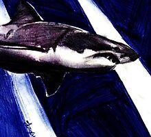 Shark!  by Kaylin Watchorn