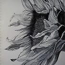 Sunflower by Deborah Pass