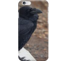 Raven perched on a ledge iPhone Case/Skin