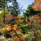 The Autumn Garden by Marilyn Cornwell