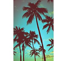 Vintage Tropical Palms Photographic Print