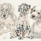 English Setter Puppies by BarbBarcikKeith