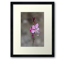 pink flower in the garden Framed Print